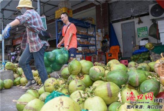 在南北水果市场商家批发销售椰子。 海口日报记者 苏弼坤 摄