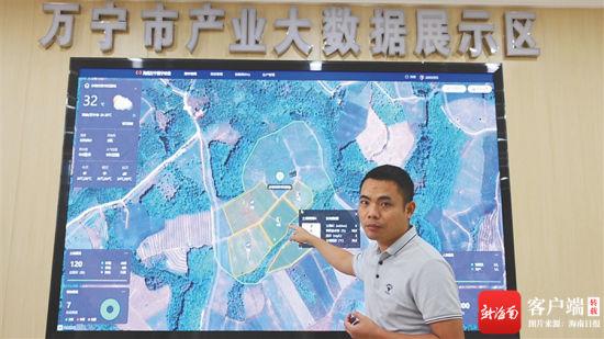 万宁市电子商务公共服务中心电子大屏幕上,记录着龙滚镇水坡村凤梨基地的天气、温度、空气相对湿度、光照强度等数据。