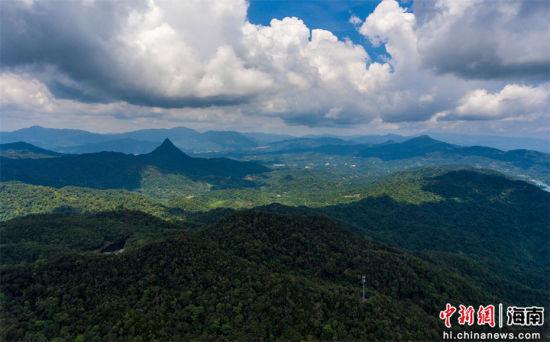 2021年9月3日,航拍海南毛瑞热带雨林。骆云飞摄