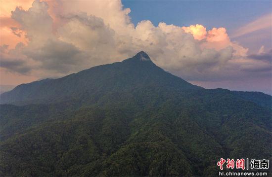 2021年9月3日,航拍海南五指山自然保护区热带雨林。骆云飞摄