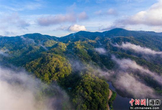 2021年9月4日,航拍海南尖峰岭自然保护区热带雨林。骆云飞摄