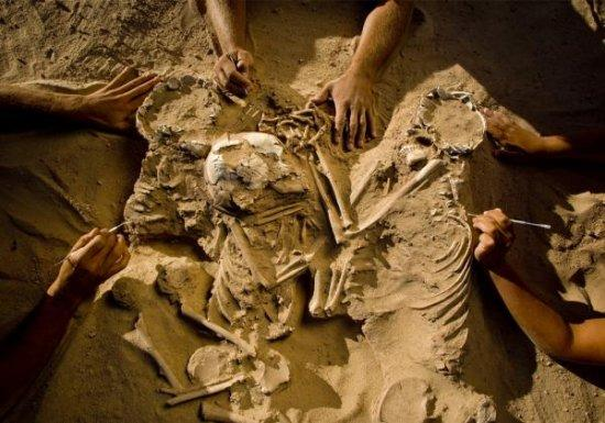 以及动物的骨骼都不属于沙漠