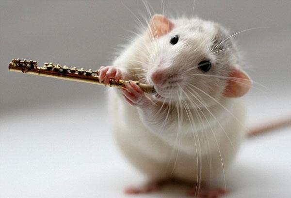 组宠物老鼠乐队(4)