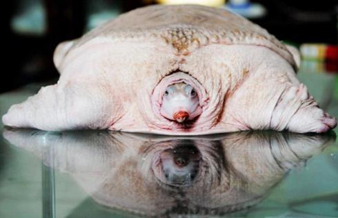 2009抢占眼球的动物(3)
