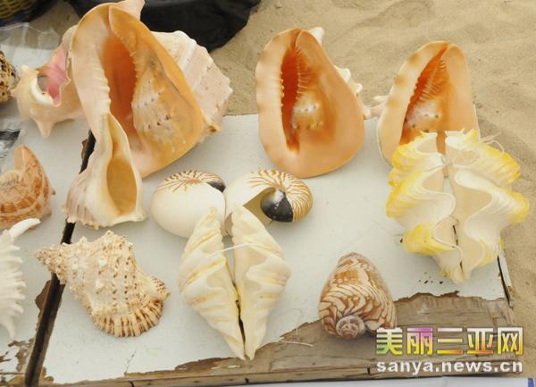 海南三亚大海风情之--斑斓海螺
