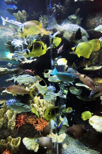 """""""青岛海底世界是国家4a级旅游风景区,它整合了青岛水族馆,标本馆,淡水"""