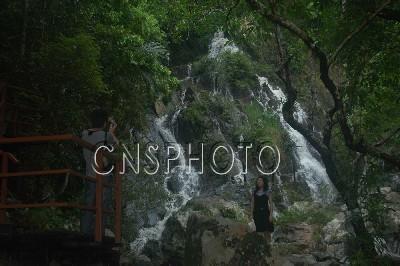 该景区集热带雨林