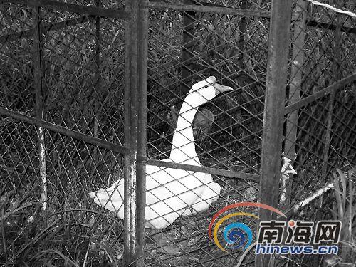 """儋州""""大型""""野生动物园忽悠市民"""