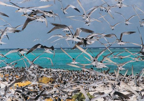 美丽富饶的西沙群岛