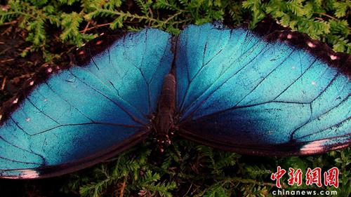拍摄到一组奇妙的热带雨林动物图片