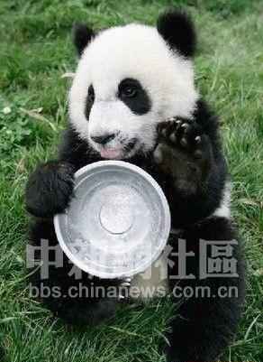 超级可爱的熊猫宝宝(6)