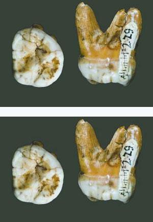 """3万年骨骼化石证明存在""""第三种人""""(组图)"""