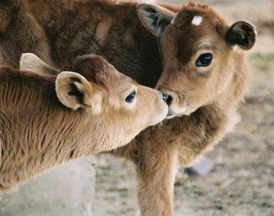 萌啊!温馨有趣的动物们(3)