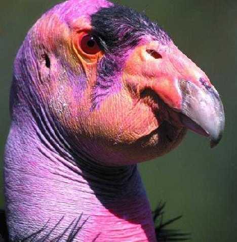 世界十大神奇的粉色动物(12)