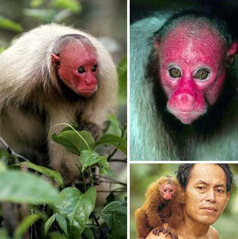 世界十大神奇的粉色动物(13)