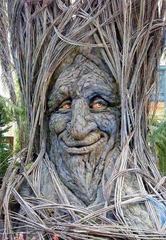 世界各地难以置信的怪树 (2)