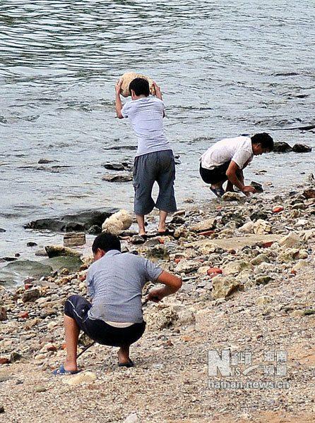 三亚不产螺化玉商家炒作引寻宝破坏珊瑚礁[图视频名人书法图片
