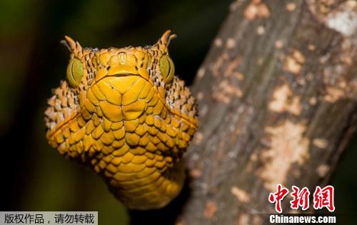野生动物保护协会在坦桑尼亚的丛林中发现一只新品种