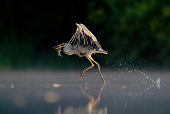 野生动物摄影作品欣赏(3)