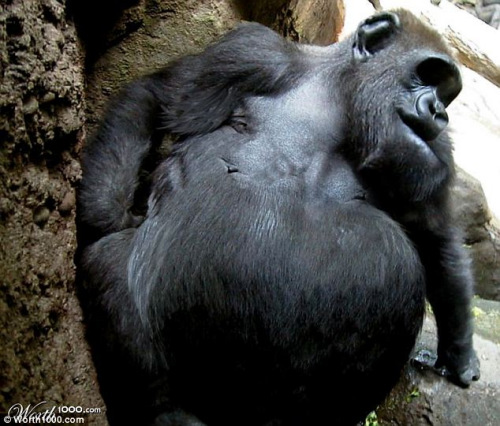 动物园各种肥胖动物(2)