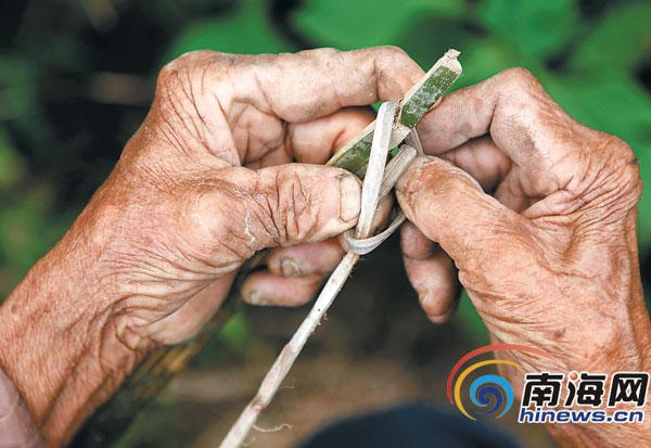 琼中一位7旬的老汉用粗糙的双手制作捕鼠夹。