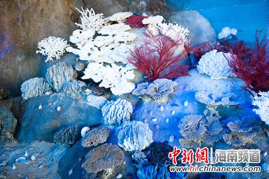 五一分界洲岛海豚鲸鲨珊瑚馆有优惠(图)