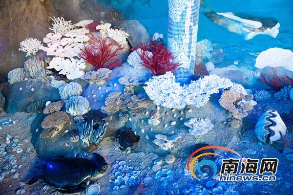 国内最大珊瑚馆陵水分界洲岛开馆