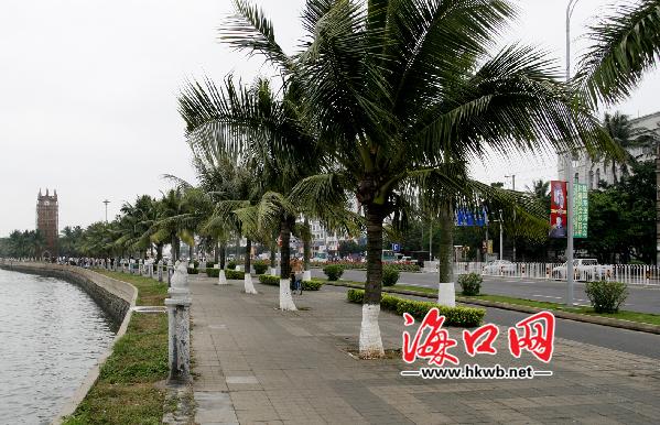 海口主城区不再大规模种植椰子树 你怎么看 高清图片