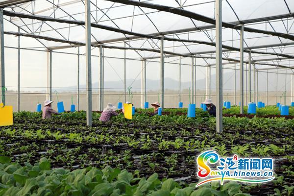 海南陵水调整产业结构培育新的经济增长点