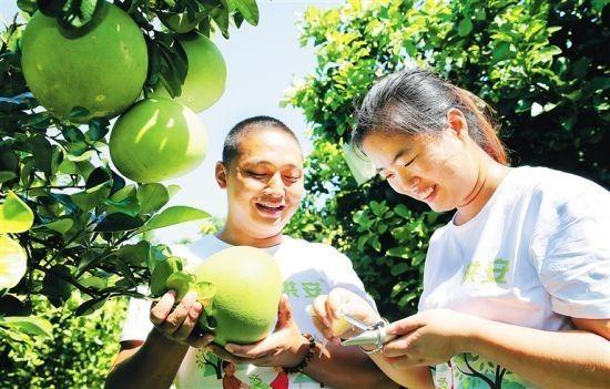 澄迈2700名大学生返乡创业 成当地经济发展新引擎