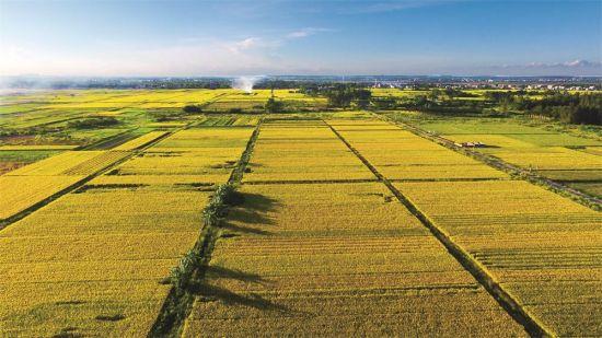 定安龙州洋瓜菜生产基地