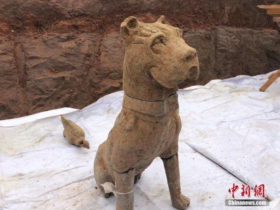 图为崖墓出土的陶犬和现在的四川土狗并不一样。 贺劭清 摄