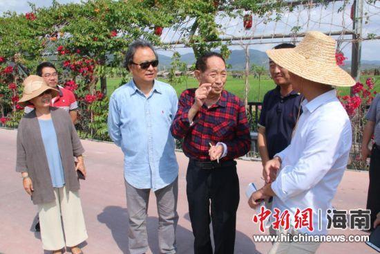 袁隆平在三亚水稻国家公园查看水稻长势