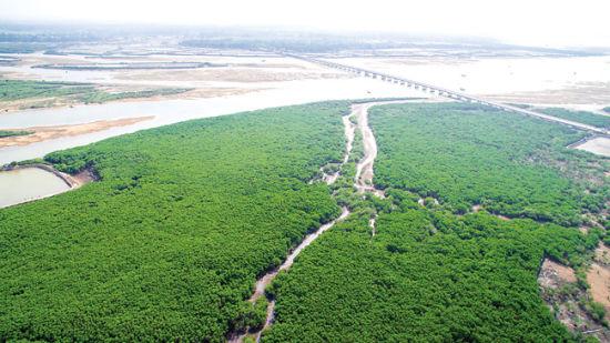 见证儋州30年巨变|儋州积极推进生态文明建设工作