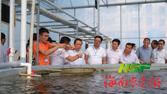 杨思涛一行查看用超离子水养殖出来的成虾情况。