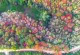 风景秀丽!定安高林村橡胶树叶开始泛黄