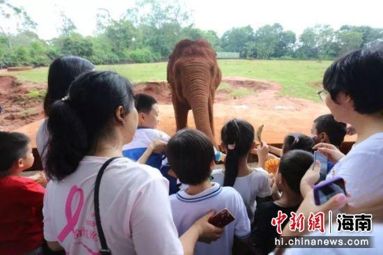 孩子们与动物互动。主办方供图