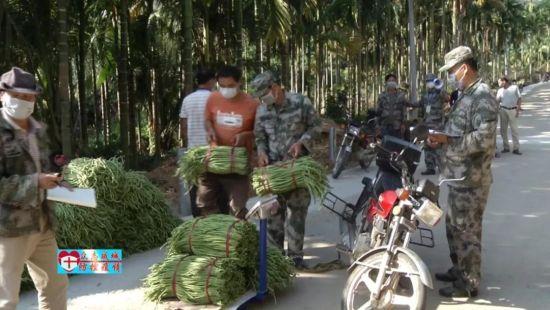 加茂镇共村党支部:组建党员销售队伍助农打通瓜菜销路