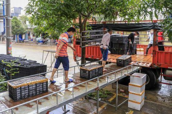 定安组织运销户收购冬季瓜菜 保障销售渠道畅通