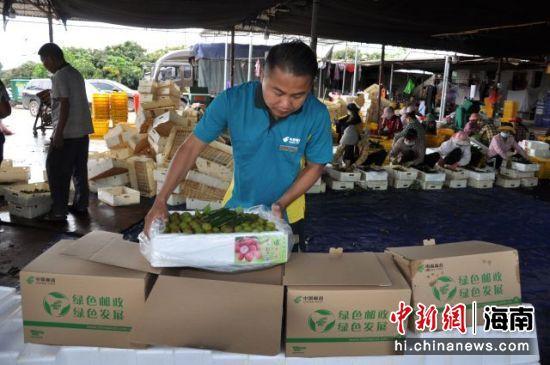 邮政人员在果园里给揽收的荔枝打包装。海南邮政供图