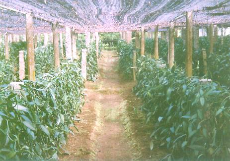 为我国华南热区进行各类热带南亚热带作物的开发种植