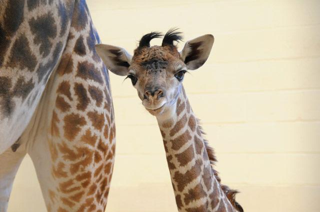 2012年最可爱的动物宝宝(13)