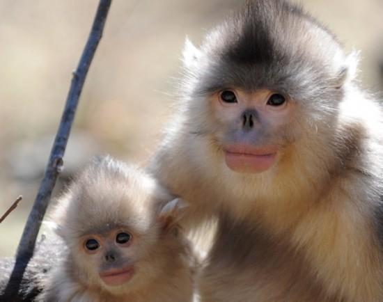 世界上最丑陋的20种动物(18)