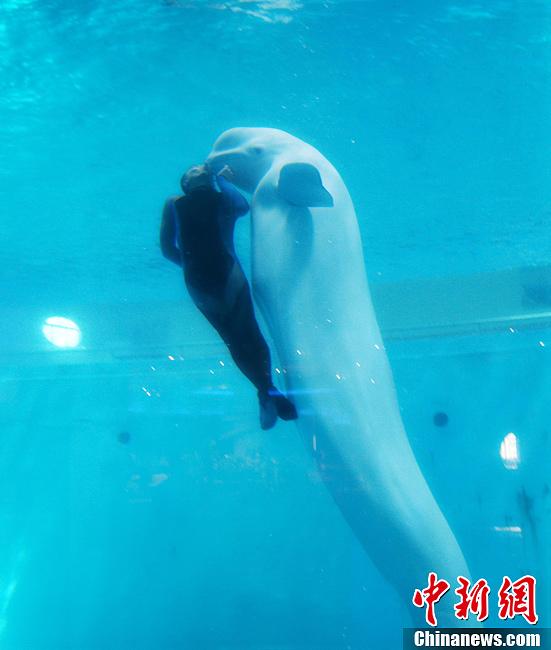 """山东蓬莱海洋极地世界海洋动物""""卖萌""""惹人爱(5)"""