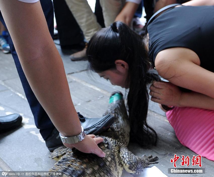 美女亲吻鳄鱼送1000元