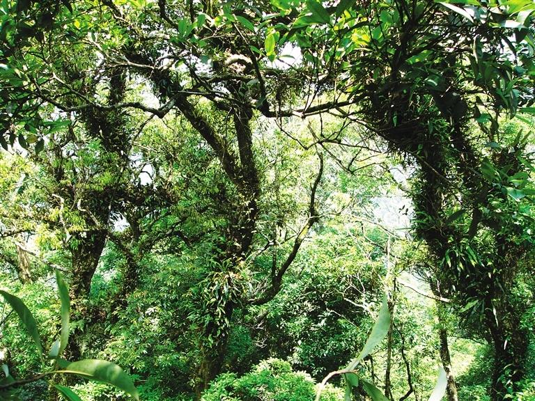 海南岛热带雨林_海南热带云雾林 神秘却富有魅力