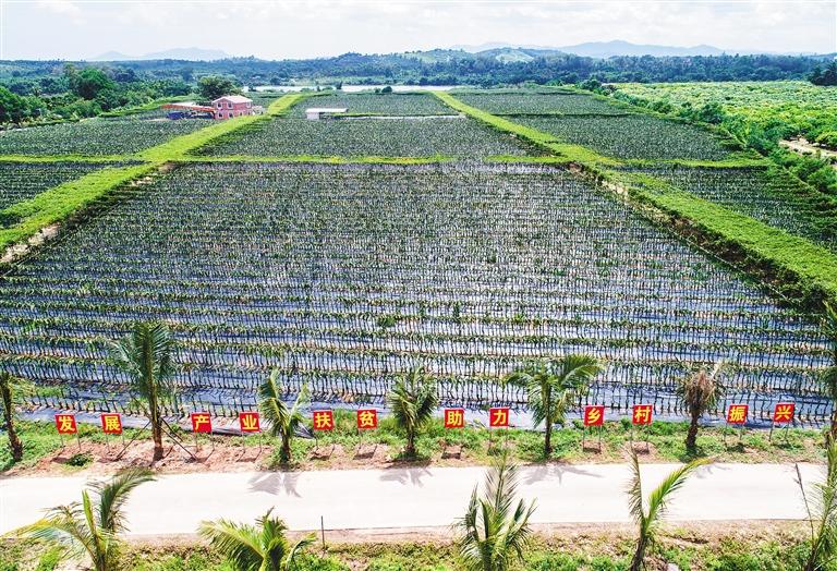 现阶段农民收入水平_定了!河北省级农业园区农民收入要高于当地平均水平30%以上