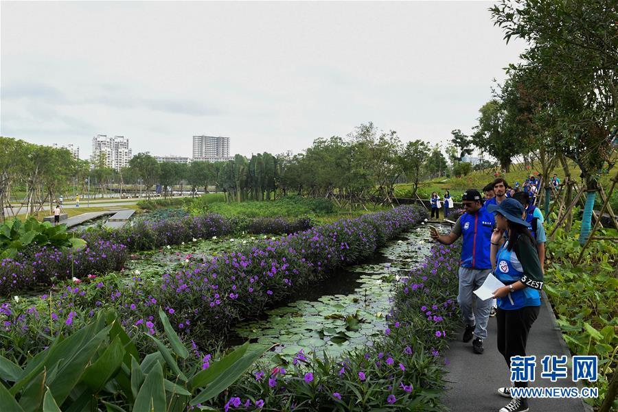 海口:国际志愿者走进湿地
