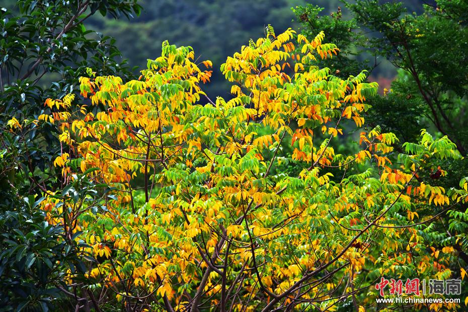 """三亚亚龙湾热带天堂景区:冬季雨林""""秋色""""撩人"""