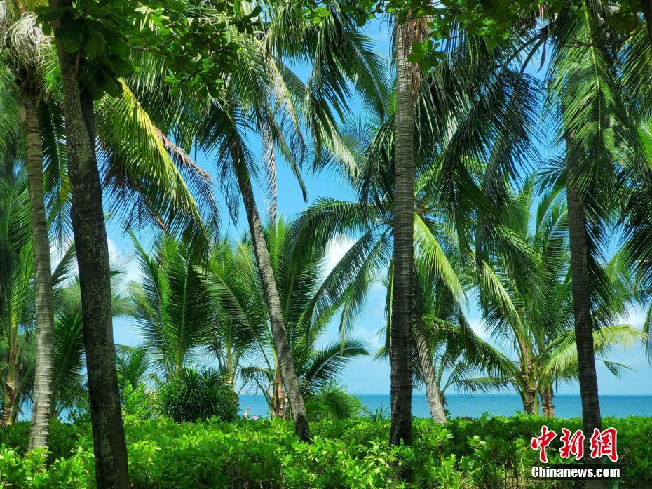 """台风""""鹦鹉""""消停天放晴 三亚湾近海呈现多样蓝"""